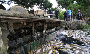Suspect sewage pipes to blame for Da Nang fish genocide?