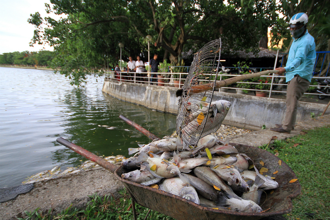 suspect-sewage-pipes-to-blame-for-da-nang-fish-genocide-6