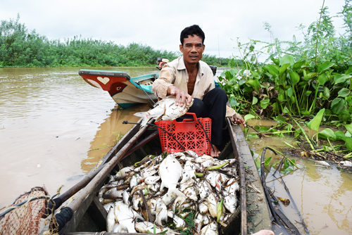 Dead fish found upstream of Saigon River. Photo by VnExpress/Van Tram