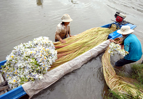 vietnamese-farmers-indignant-as-mekong-delta-prays-for-flood-waters-to-arrive-1