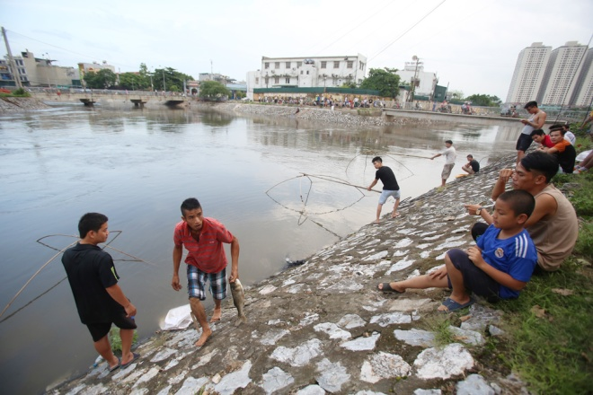 In Lich River passing Hoang Mai District, locals using lift nets to catch fish after the typhoon which raised river water to higher levels.