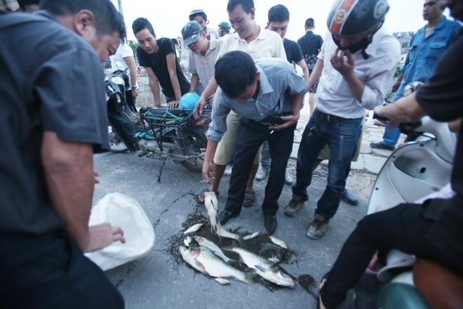Dianmu fish sells for VND20,000 - VND30,000 ($1 - $1.5) per kilogram.