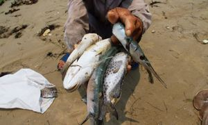 Formosa's toxic disaster: are fish safe to eat now in central Vietnam?