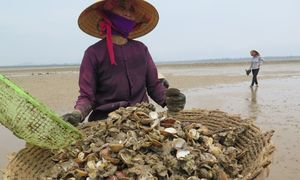 Vietnam's seafood industry feels the pinch after mass fish deaths