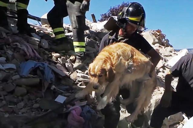 Romeo the miracle dog survives Italy quake