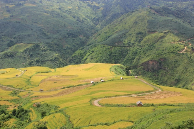 a-golden-season-in-the-rice-paddies-2