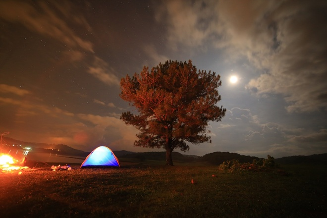 da-lats-lonely-tree-offers-shelter-for-the-night-4
