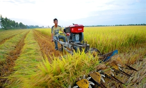 Vietnam mulls pooling farmland to boost productivity: official