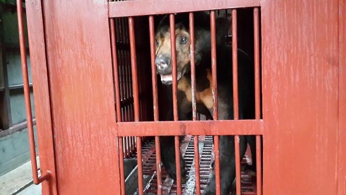 Endangered animals rescued in Vietnam's Central Highlands