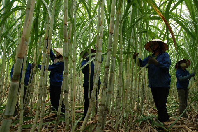 vietnams-sugar-producer-nears-merger-plans-singapore-listing-report