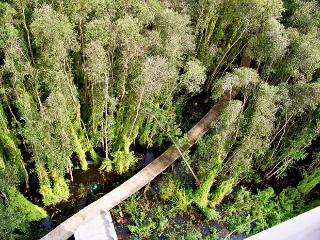 5 rừng tràm nhất định phải ghé mùa nước nổi