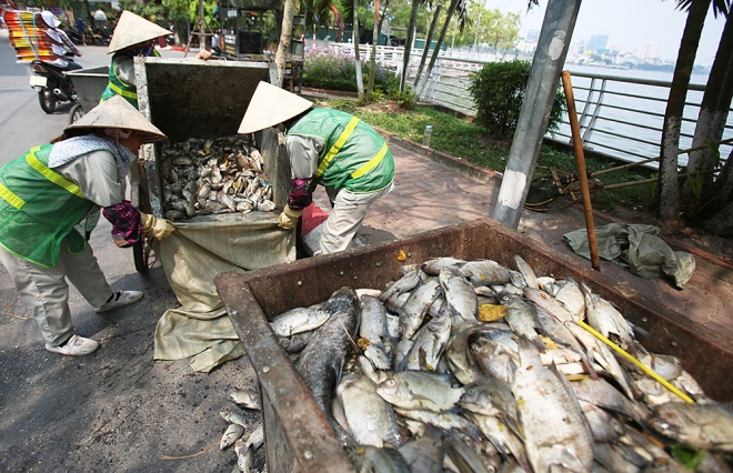 hanoi-lake-returns-to-life-after-mass-fish-deaths-5