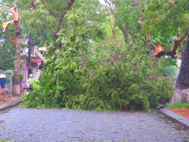 tropical-storm-wreaks-havoc-on-hues-street-trees