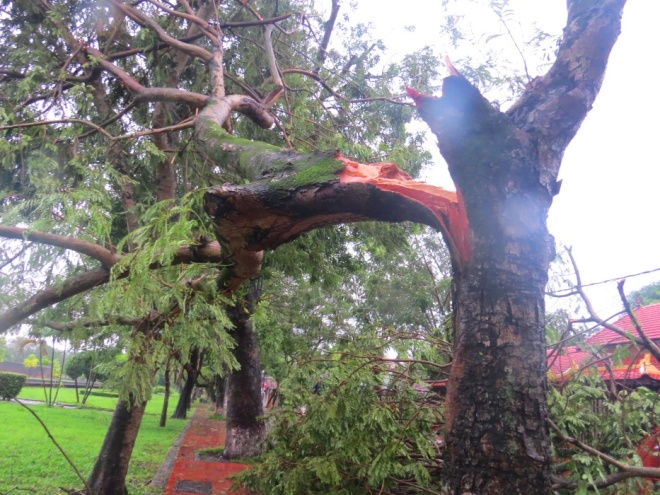 tropical-storm-wreaks-havoc-on-hues-street-trees-1