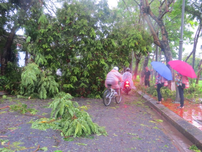 tropical-storm-wreaks-havoc-on-hues-street-trees-4
