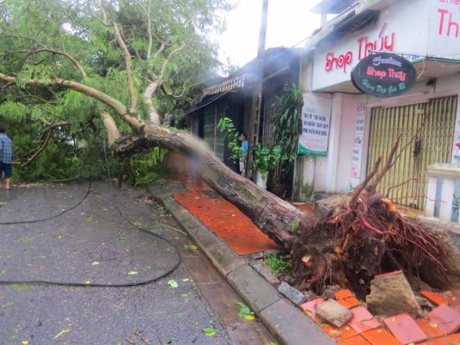 tropical-storm-wreaks-havoc-on-hues-street-trees-5