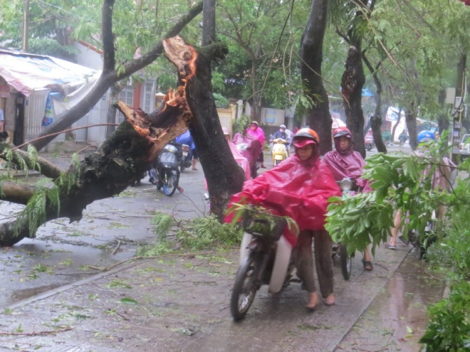 tropical-storm-wreaks-havoc-on-hues-street-trees-6