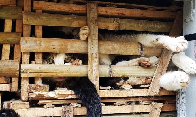 Vietnam's nascent network of animal rescue volunteers seeks coalition
