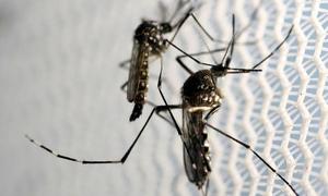 Zika virus mosquitoes detected in central Vietnam