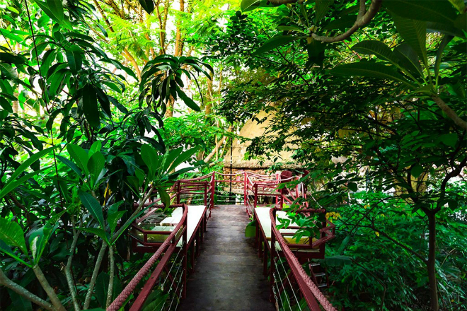 tree-house-hidden-in-hanoi-jungle-enraptures-travelers-9