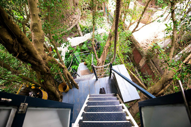 tree-house-hidden-in-hanoi-jungle-enraptures-travelers-10