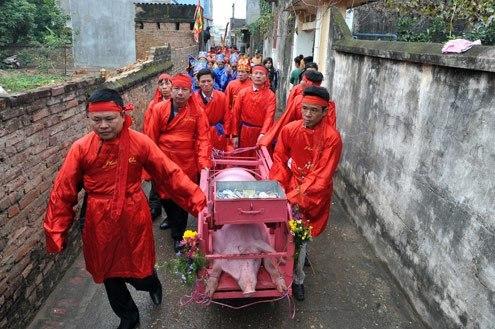 Vietnam bans animal slaughter at violent spring festivals
