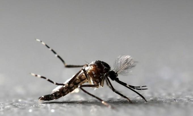 Vietnam confirms at least 23 Zika cases
