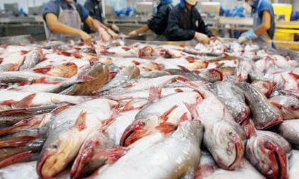 Brazil bans catfish imports from Vietnamese company