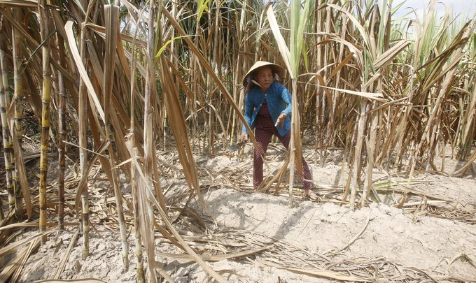 Vietnam gov't says needs $1 billion to counter effects of El Nino