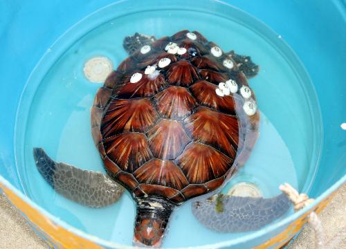 Fishermen rescue rare turtle in central Vietnam