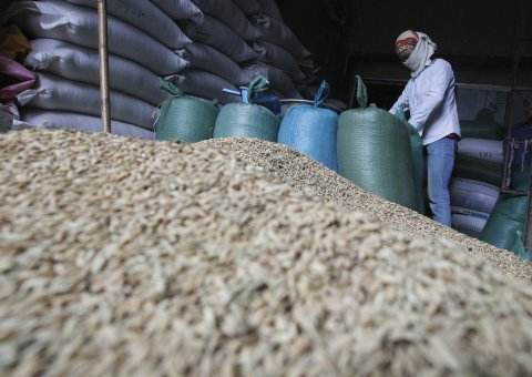 Vietnam's rice exports to crash to 8-year low in 2016