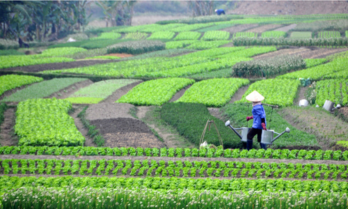 HCMC gears towards high-tech agriculture with $114 mln plan
