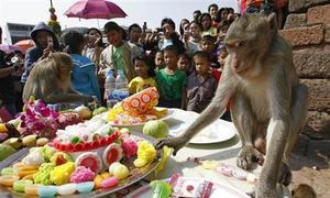 Thailand province thanks fruitful monkeys