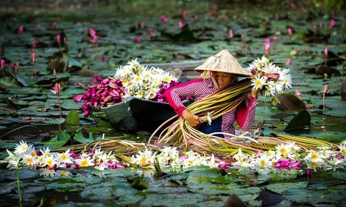 Taste of the season: Flood brings famous delicacies to Vietnam's Mekong Delta