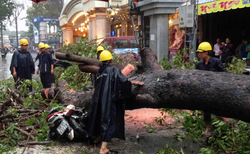 Urban development blamed for deadly tree falls in Ho Chi Minh City