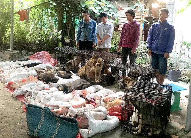 47 dogs seized as police bust dog meat ring in southern Vietnam