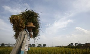 Bad weather blamed as Vietnam misses target for rice exports