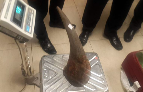 Vietnam seizes 50 kilos of rhino horn from Kenyan cargo flight