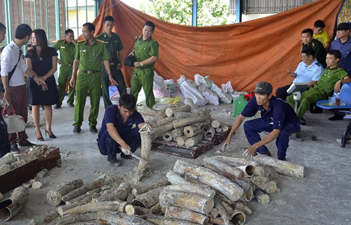 Police seized a ton of ivory hidden inside a container in Ho Chi Minh City last month. Photo by VnExpress/Q.T.