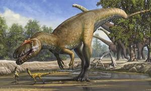Some dino eggs took months to hatch, perhaps leading to extinction: study