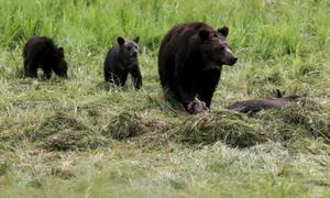 How we shop hurts endangered species