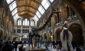 London bids farewell to Dippy the dinosaur