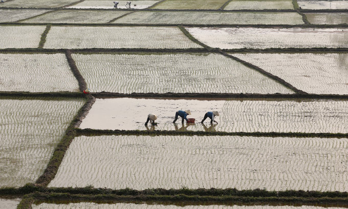 Vietnam's rice exports may continue slide in 2017