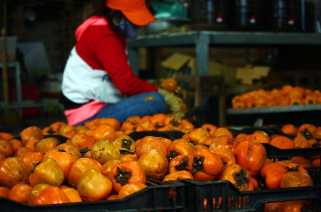 who-says-money-doesnt-grow-on-trees-vietnamese-farmers-cash-in-on-dried-persimmons-1