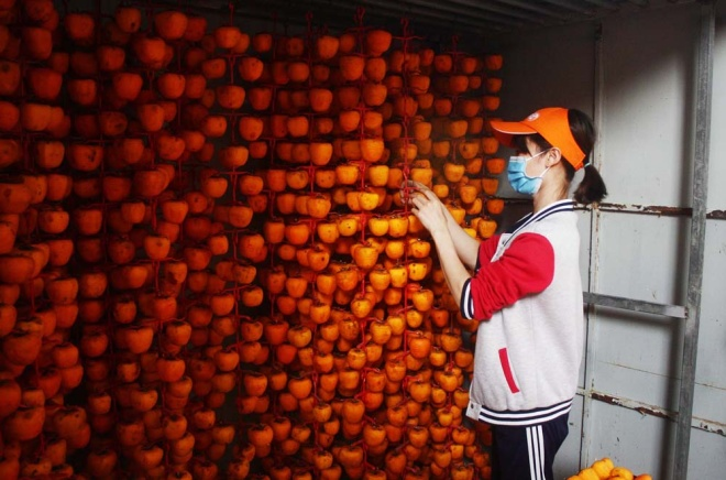 who-says-money-doesnt-grow-on-trees-vietnamese-farmers-cash-in-on-dried-persimmons-5