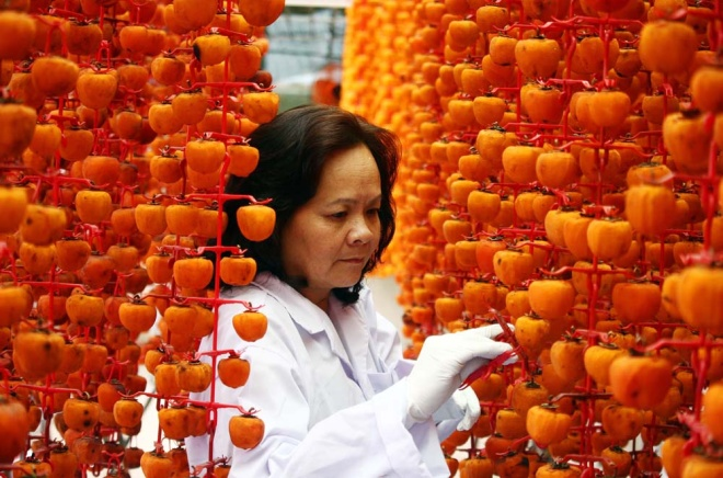 who-says-money-doesnt-grow-on-trees-vietnamese-farmers-cash-in-on-dried-persimmons-7