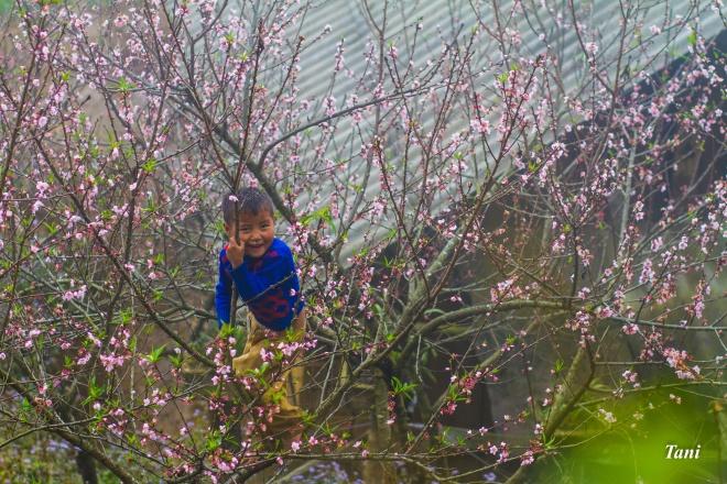 wild-peach-tree-blossoms-lighten-misty-mountains-in-northwestern-vietnam-4