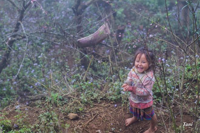 wild-peach-tree-blossoms-lighten-misty-mountains-in-northwestern-vietnam-5