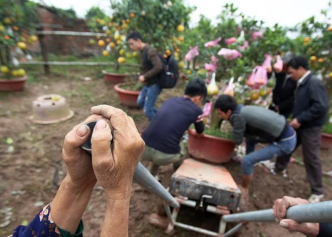 hanoi-farmer-creates-franken-fruit-trees-for-tet-5