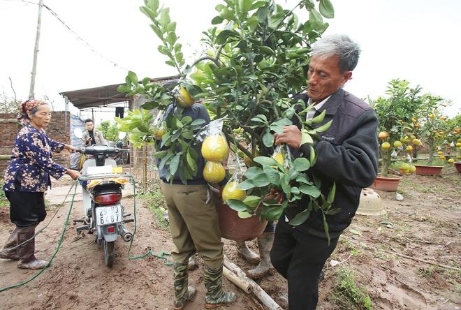 hanoi-farmer-creates-franken-fruit-trees-for-tet-7